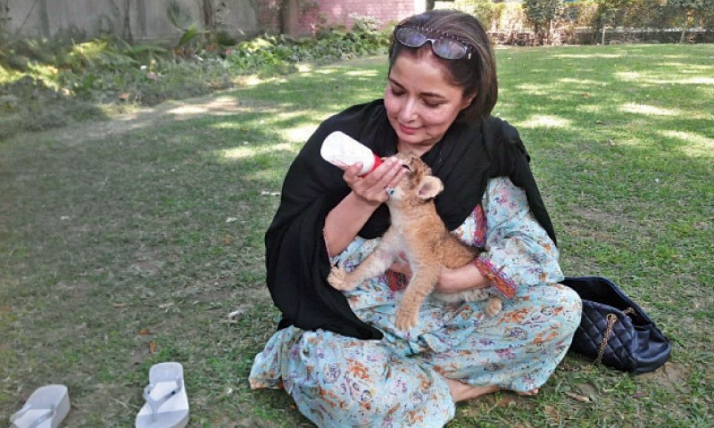 Babra Sharif is now officially 'Mother of Lion' (1)