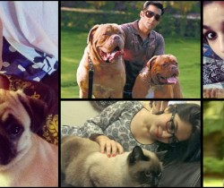 Lollywood and Bollywood's celebrities with their pets