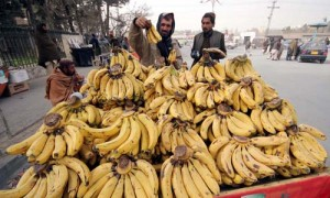 QUETTA, PAKISTAN, DEC 20: A man sells bananas to earn his livelihood for support his  family on his push-cart at a road in Quetta on Tuesday, December 20, 2011.  (Arsalan Naseer/PPI Images).