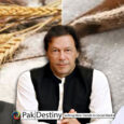 Will PTI government be ever accountable for causing a loss of Rs400bn in sugar and wheat blunder